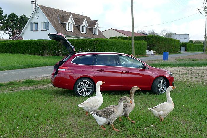 Peugeot 308 SW  – Mut zur Lücke