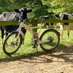 Da gucken nicht nur die Kühe neidisch